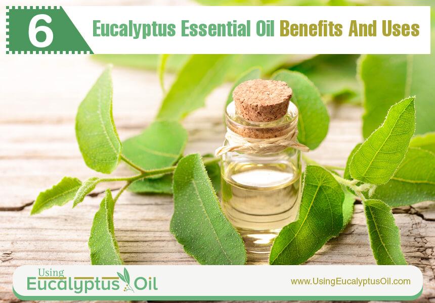 eucalyptus essential oil aromatherapy